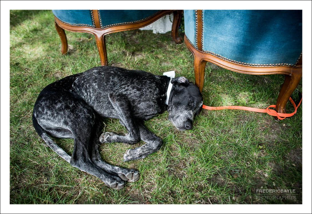 le chien du marié dormant pendant la cérémonie