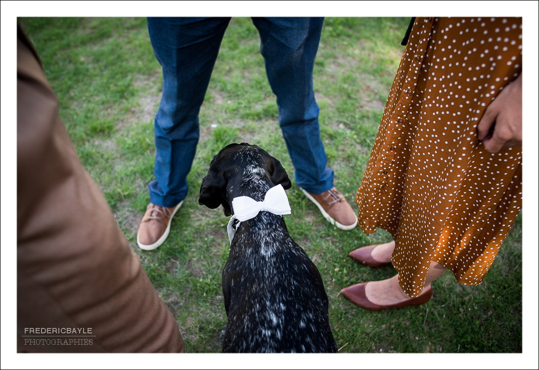 plan en plongée sur le chien du marié