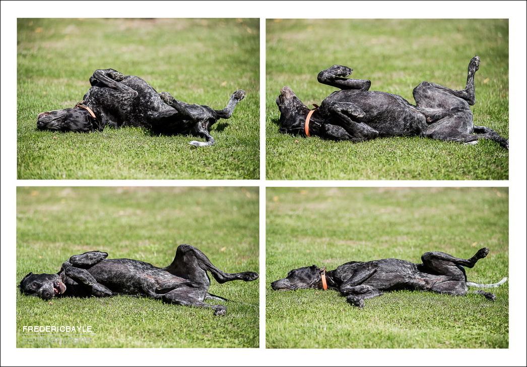 vue du chien faisant des galipettes