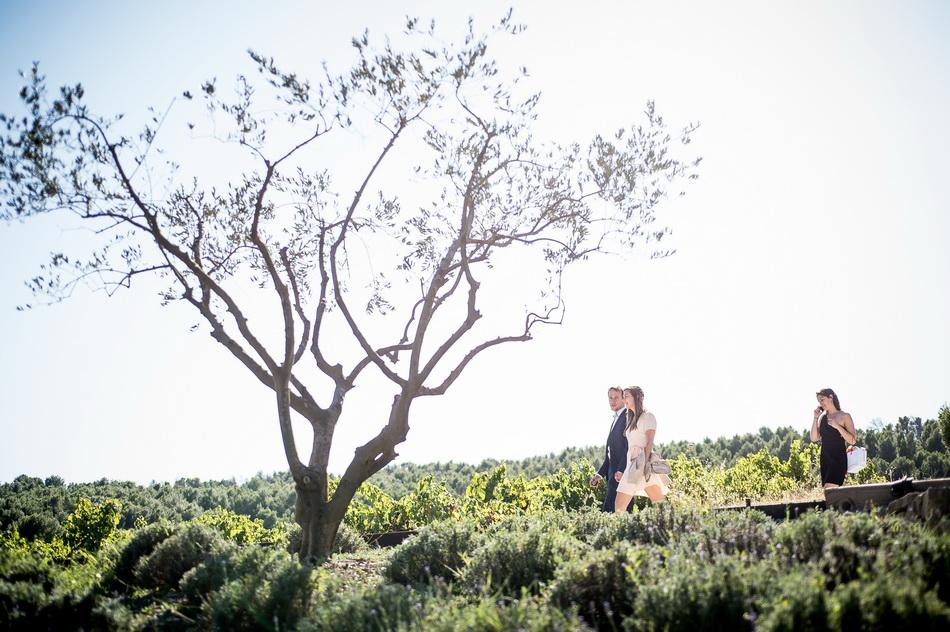 beau plan de la Provence avec le soleil